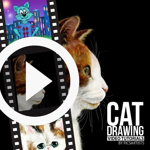 cat time lapse videos