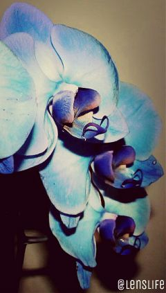 photography nature flower macro orchid