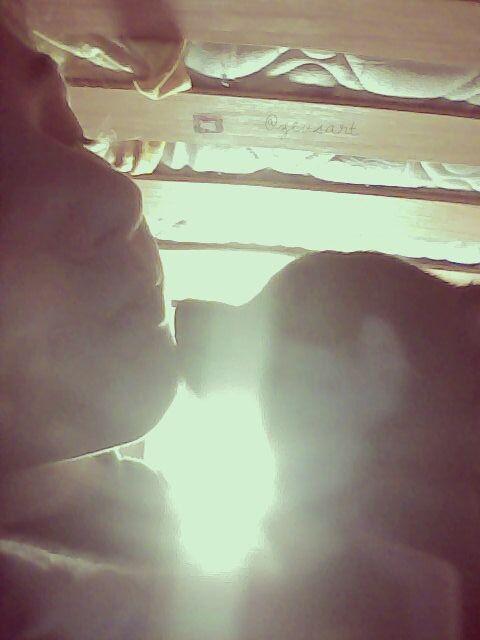 selfie mypet vintage love