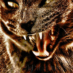 emotions filmburneffect photography pets & animals sepia