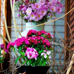 japan flower