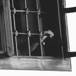 black & white emotions hand prison freedom