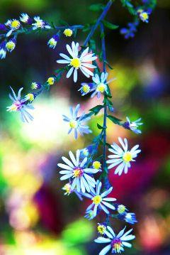 flower summer spring travel photography