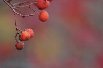 autumn photograph nature japan colorful