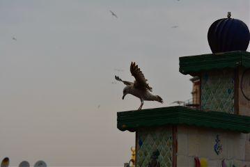 bird seagull gull istanbul galata