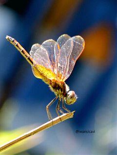 macro nature petsandanimals photography