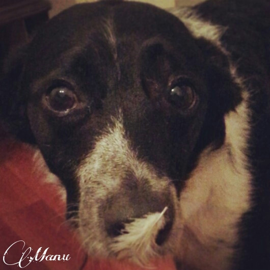 #petsandanimals #puppy #dog