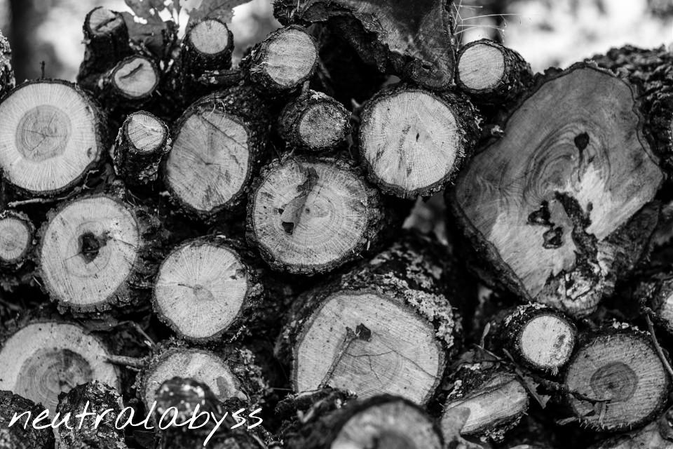 Stack em' up lay em' down. #photography #nature #vintage #blackandwhite #winter #oldphoto
