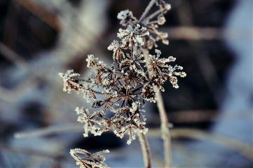 winter goodtime snow magic star