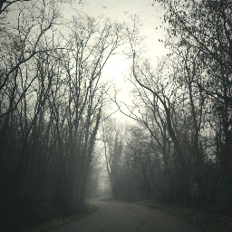fog forest road
