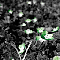 WAPGreen nature spring colorsplash
